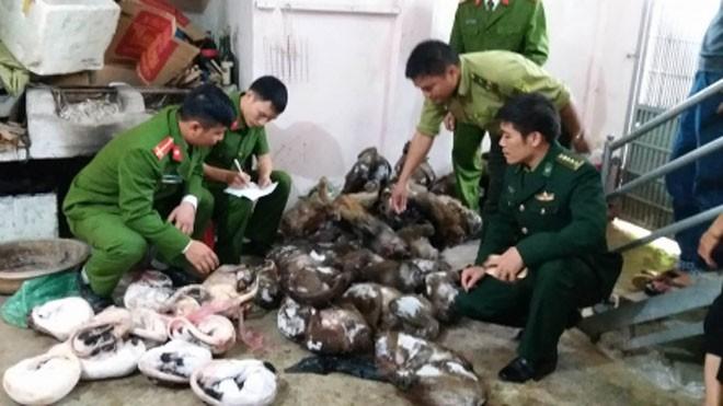 Cơ quan chức năng phát hiện số lượng lớn động vật hoang dã.