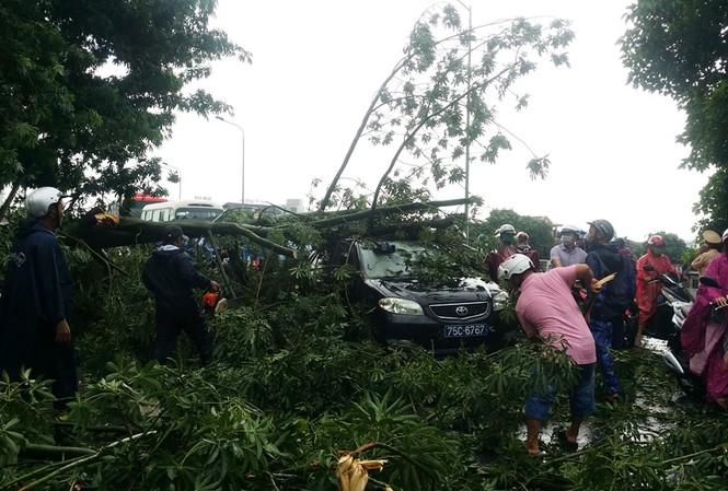 Cây đổ bất ngờ trước bão số 10 khiến ô tô hư hỏng.