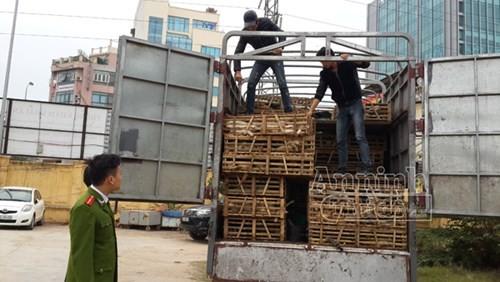 Phát hiện xe tải chở 3 tấn mèo nhập lậu từ Trung Quốc về Hà Nội