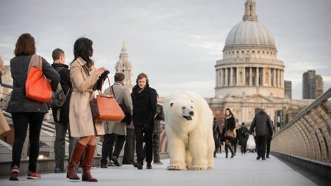 Sự xuất hiện của chú gấu bắc cực cỡ lớn khiến nhiều người ngạc nhiên và chú ý