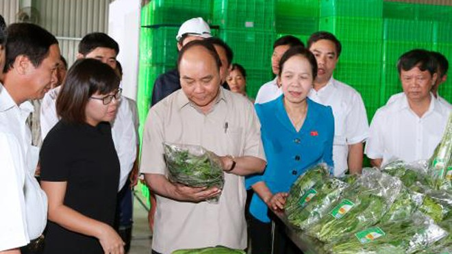 Thủ tướng Nguyễn Xuân Phúc đến thăm Dự án đầu tư Nông nghiệp ứng dụng công nghệ cao Vineco Hải Phòng. Ảnh: Thống Nhất-TTXVN