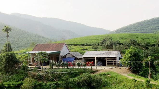 Vườn nhà ông Dân nằm sát cạnh khe suối nên đàn voi rừng thường xuyên ghé thăm.