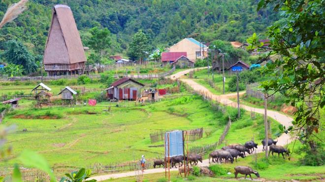 Mùa sim chín trên cao nguyên Kon Plông