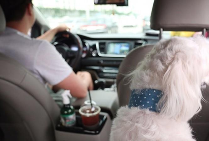 Dù cước phí đắt gấp 4 lần nhưng dịch vụ taxi dành cho thú cưng vẫn nở rộ và lan khắp Hàn Quốc. Ảnh: The Korean Times