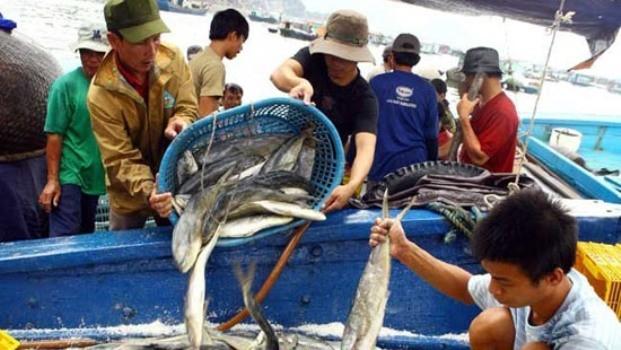Phó Thủ tướng đồng ý bổ sung các đối tượng gián tiếp bị thiệt hại do Formosa gây ra (Ảnh IT)