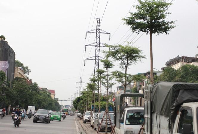 Cây xanh được trồng dưới lưới điện cao áp.