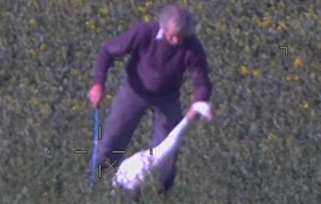 Hình ảnh ông David Thompson đánh đập thiên nga được lực lượng bảo vệ bờ biển chụp lại từ trực thăng.