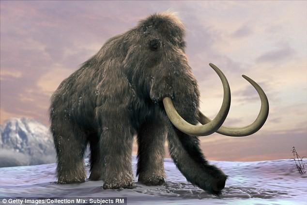 Voi ma mút từng thống trị Trái đất suốt một thời gian dài trước khi bị tuyệt chủng cách đây 4.500 năm.