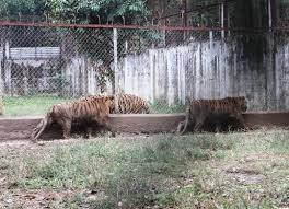 """Hà Nội quyết """"xóa sổ"""" cơ sở nuôi động vật hoang dã không an toàn"""