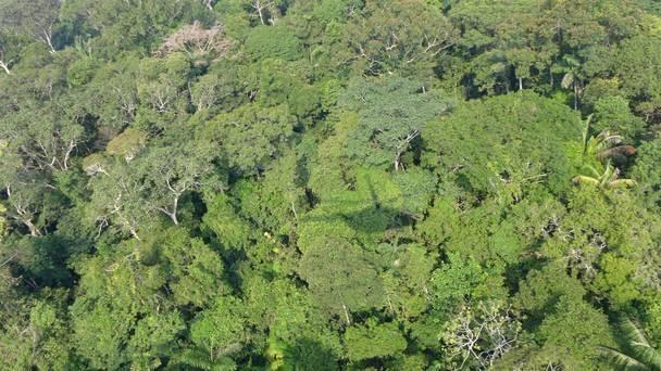 Chiếc trực thăng quân sự của Venezuela mất tích trong rừng rậm Amazon