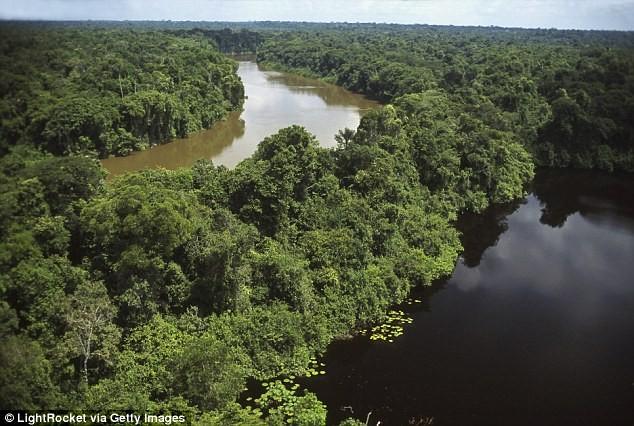 Cảnh sát Brazil phát hiện ra Pilipa gần rừng rậm Amazon