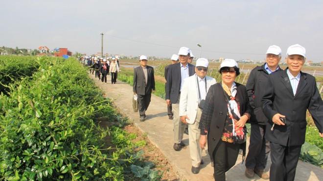 Các bệnh nhân chứng kiến thực tế vùng trồng Dây thìa canh chuẩn hóa sản xuất nên Diabetna, rộng hơn 3ha tại Hải Hậu, Nam Định