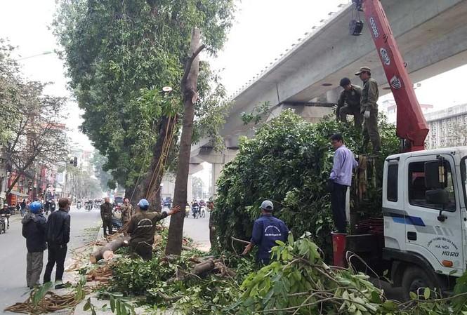 Theo quan sát của PV, đến trưa ngày 14/1, các công nhân vẫn tiếp tục chặt hạ hàng cây.