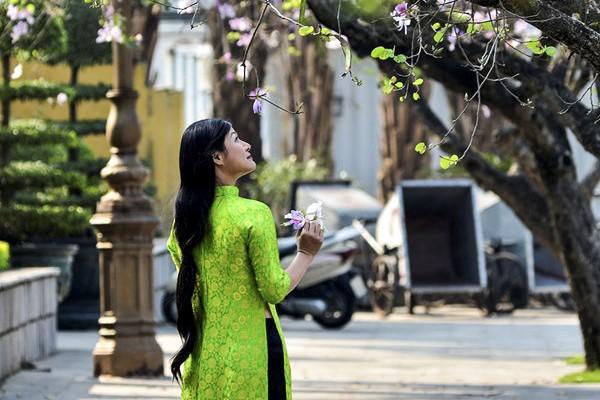 Trên nhiều tuyến đường ở thủ đô Hà Nội, những nhành hoa ban của núi rừng Tây Bắc đang bừng nở khoe sắc.