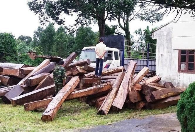 Số gỗ lậu bị thu giữ.