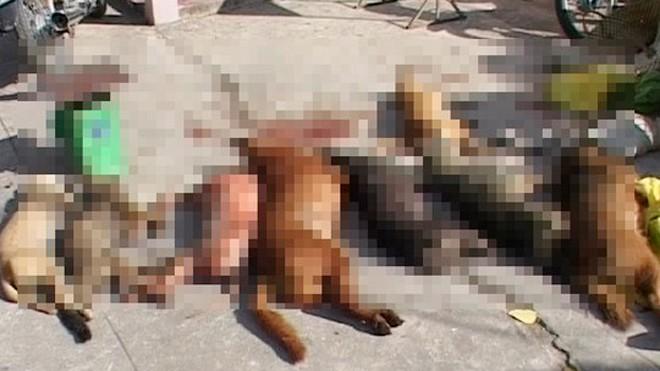 Một vụ trộm chó bị bắt quả tang ở Cà Mau