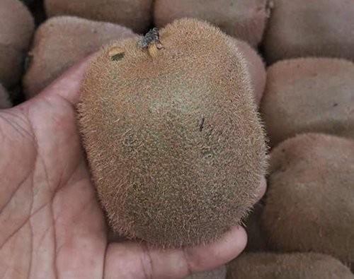 Kiwi Trung Quốc bán buôn chỉ có giá 30.000 đồng/kg