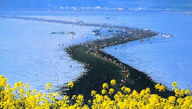 Con đường nhỏ lộ ra nối liền đảo Jindo và Modo.