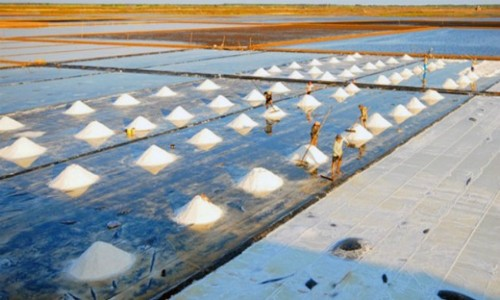 Năm nay Việt Nam sẽ thiếu 300.000 tấn muối. Ảnh: PV.