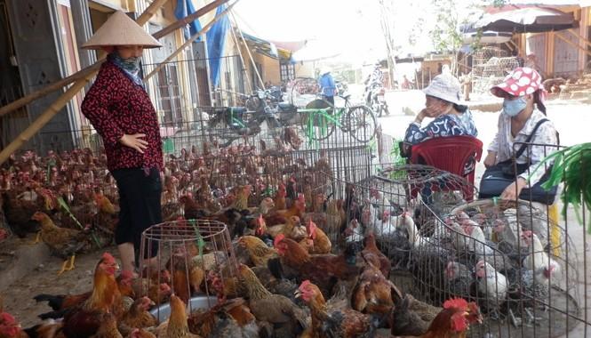 Doanh nghiệp phản ánh, một con gà đang cõng tới 14 loại phí. Ảnh Phạm Anh.