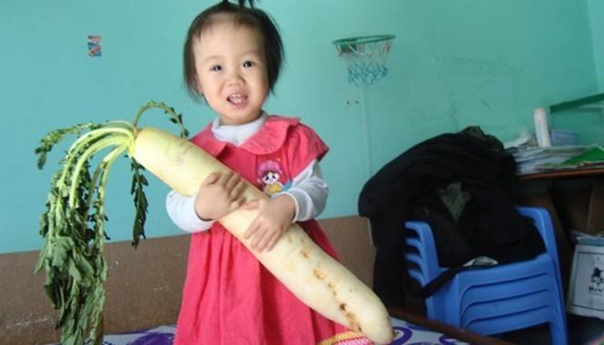 Củ cải khủng mà gia đình anh Bảo bất ngờ thu hoạch được.