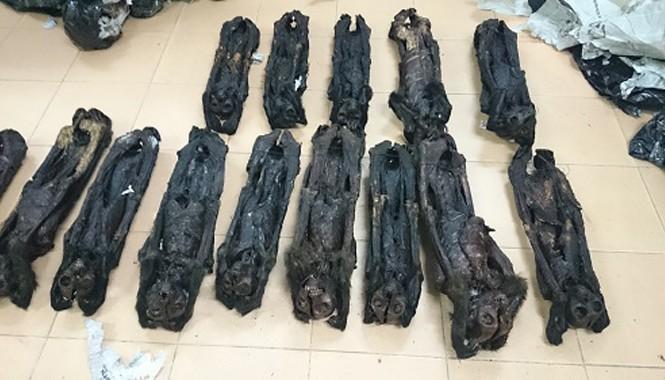 20 cá thể linh trưởng đã chết bị bắt khi đang vận chuyển.
