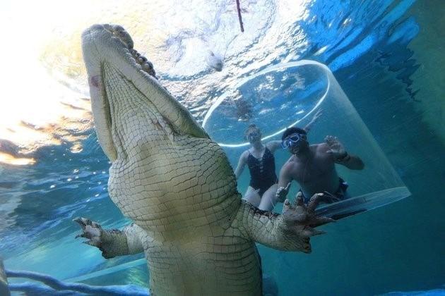 Lồng tử thần (Cage of Death) là điểm giải trí nổi tiếng, trong đó du khách sẽ được đối mặt với những con cá sấu nước mặn khổng lồ.