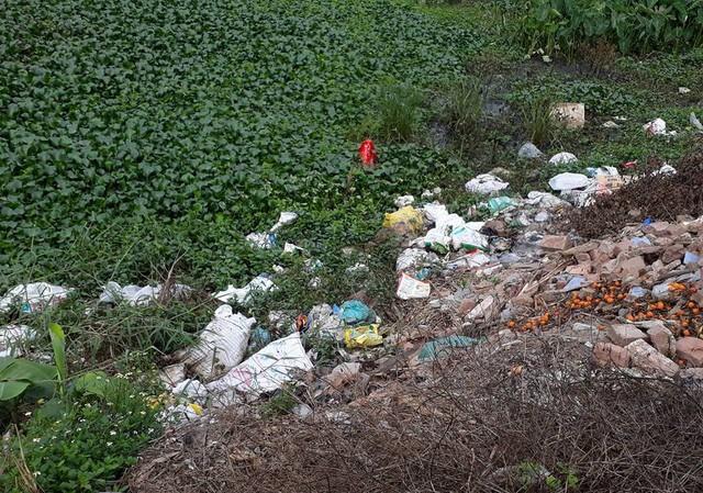 Những con gà Đông Tảo chết được người dân cho vào bao tải và vứt bừa bãi ra môi trường, gây ô nhiễm và nguy cơ lây lan mầm bệnh rất lớn.