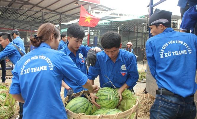 Sinh viên TP. HCM bán dưa hấu giúp nông dân Quảng Ngãi