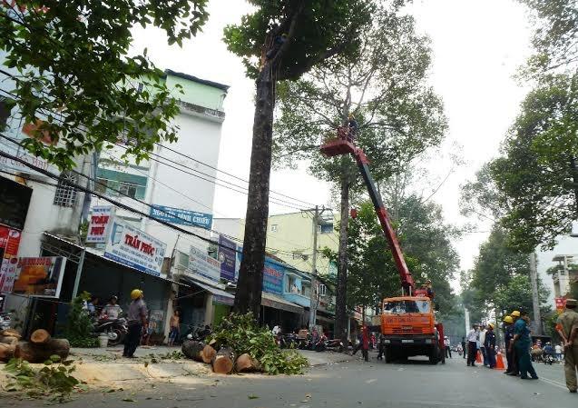 Hiện trường nhánh cây bị gãy làm hai người bị thương. Ảnh: Đông Sơn