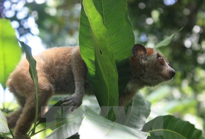 Loài thú nào sẽ được vào Công viên hơn 7.300 tỷ đồng ở Ninh Bình?