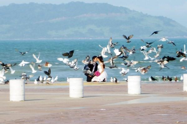 Hà Nội sắp thả chim bồ câu tại Vườn hoa Lý Thái Tổ