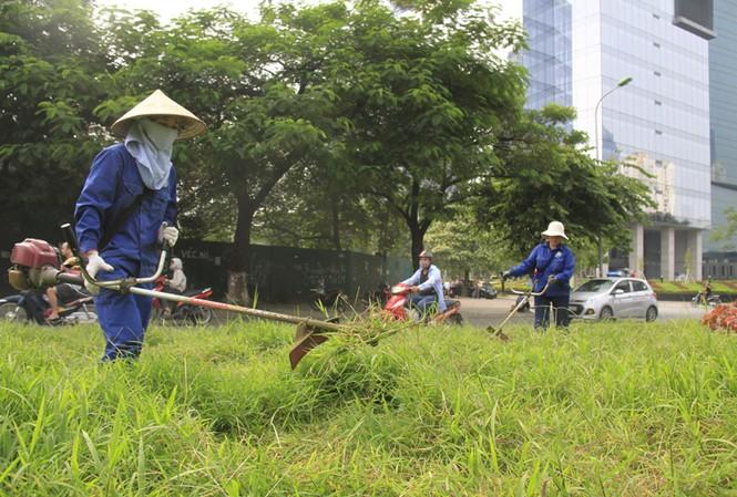 Hà Nội cắt cỏ trở lại: Chết máy vì cỏ quá rậm