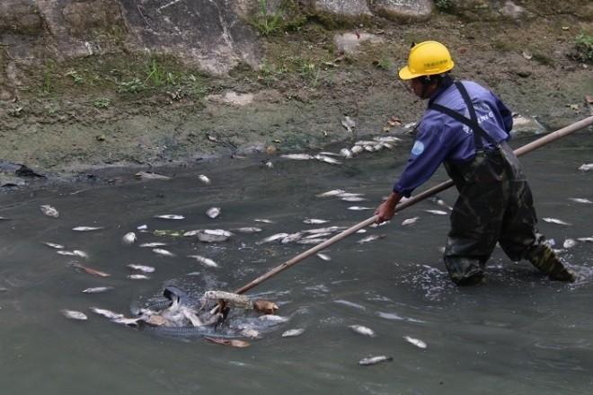 Sáng 27/2, nhân viên Công ty Công ty Thoát nước và Xử lý nước thải TP Đà Nẵng vớt vài chục kg cá chết.