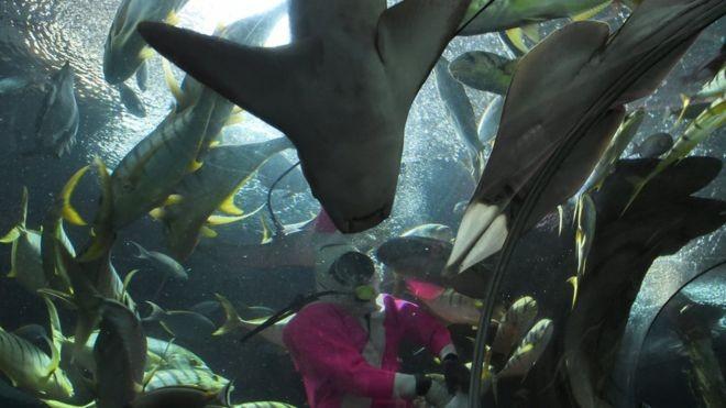 Thợ lặn tử vong do bị cá đuối tấn công