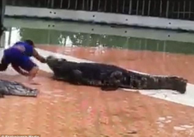 Huấn luyện thú bị cá sấu ngoạm tay lúc biểu diễn.