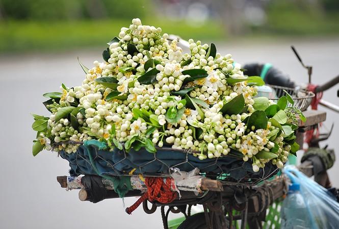 Đường phố Hà Nội ngát hương hoa bưởi