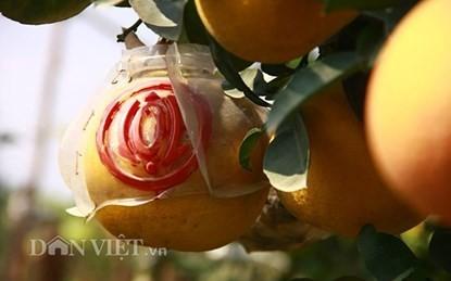Vườn cây 'ngũ-thất-cửu quả' độc nhất vô nhị giữa Thủ đô - ảnh 14