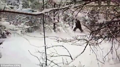 """Các nhà khoa học bất ngờ bắt gặp """"người tuyết Yeti"""" tại Nga - ảnh 2"""