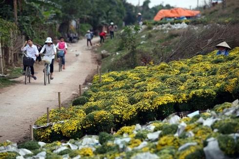 Cuối tuần đi vườn hoa Xuân Quan đón Tết sớm - ảnh 10