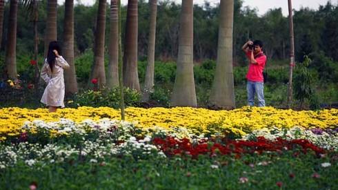 Cuối tuần đi vườn hoa Xuân Quan đón Tết sớm - ảnh 1