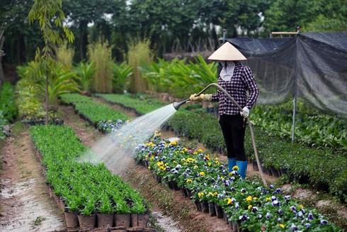 Cuối tuần đi vườn hoa Xuân Quan đón Tết sớm - ảnh 2