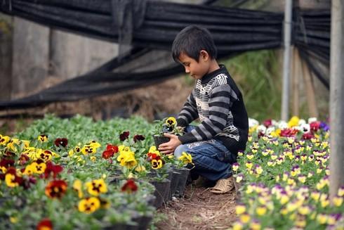 Cuối tuần đi vườn hoa Xuân Quan đón Tết sớm - ảnh 5