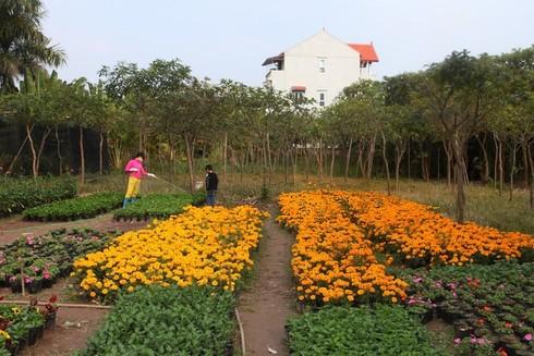 Cuối tuần đi vườn hoa Xuân Quan đón Tết sớm - ảnh 7