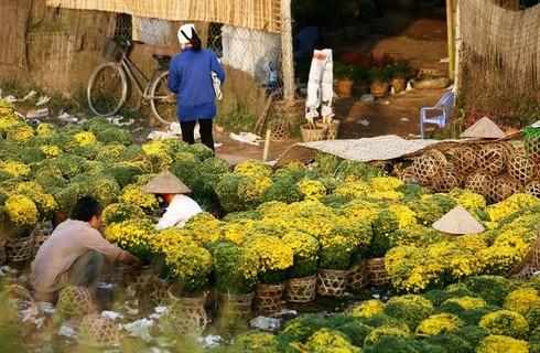 Cuối tuần đi vườn hoa Xuân Quan đón Tết sớm - ảnh 8