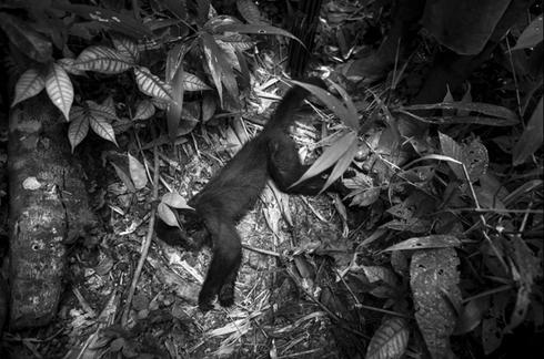 Cuộc sống hoang dại của bộ lạc ít người nhất hành tinh - ảnh 2