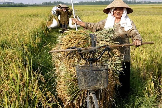 Vượt lên nền nông nghiệp 'cơ bắp' - ảnh 1
