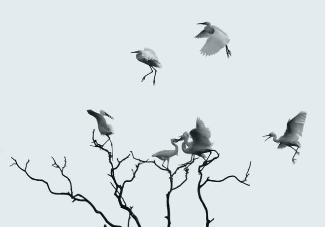 Những mùa chim thương mến - ảnh 2