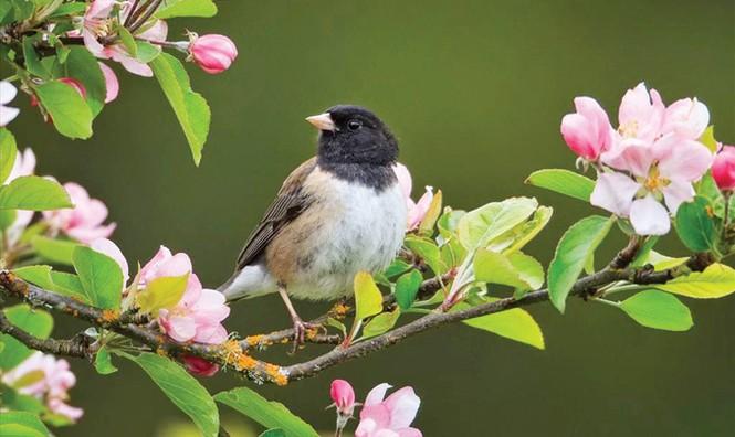 Những mùa chim thương mến - ảnh 1