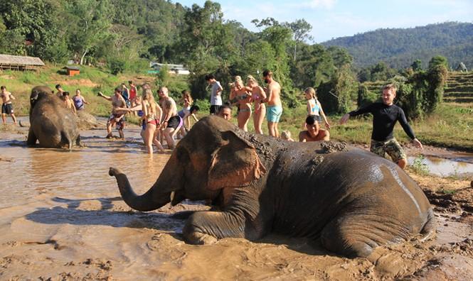 Sang Thái chăn voi - ảnh 1